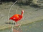 Bird Park in Villard Les Dombes (95km)